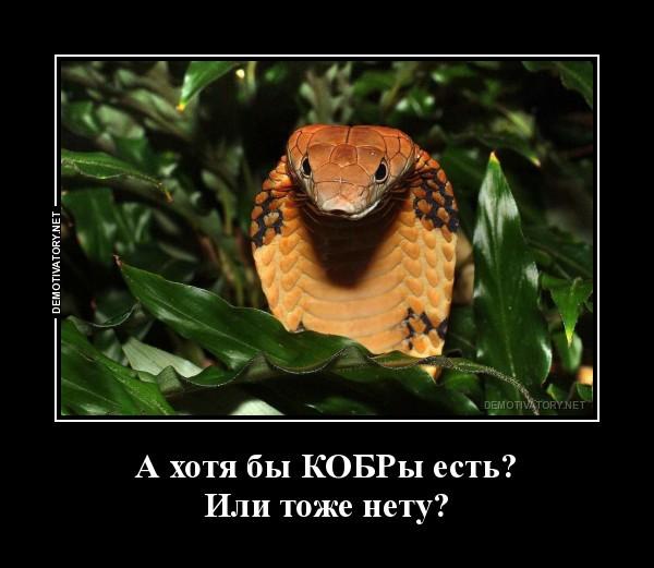 КОБРы