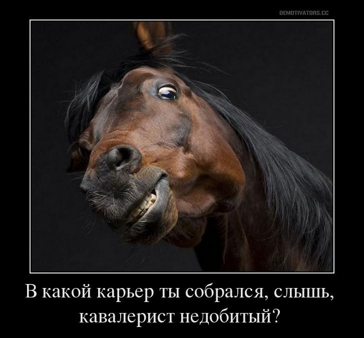 Карьер лошадь прикол