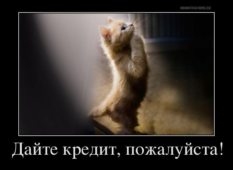 Котенок просит кредит