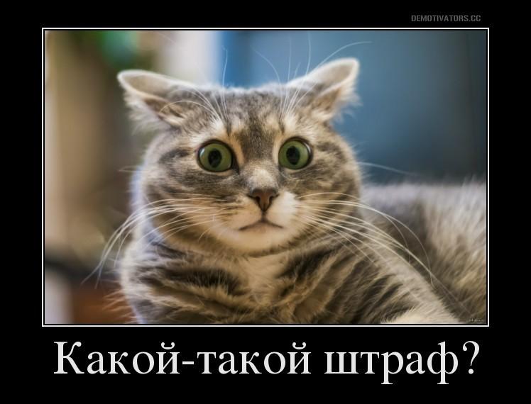 Кот без прописки