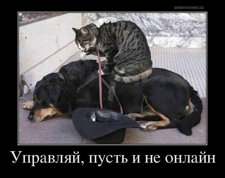 Кот управляет