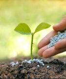 Дивиденды ФосАгро в 2020 году: фосфора много не бывает